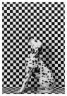 Gert Weigelt (1943)  -  Dalmatian - Postkaart -  B0808-1