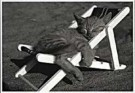 Sipa Press,  -  Cat in Sunshine - Postkaart -  B0875-1