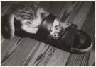 Norbert Eick  -  Zino II - Postkaart -  B0977-1