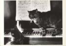 Marianne Morris  -  Cats - Postkaart -  B1016-1