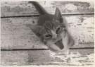 Miriam Philippsborn  -  Cheshire Cat - Postkaart -  B1558-1