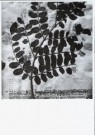 Paul den Hollander (1950)  -  Hortus Siccus IX # 2 - Postkaart -  B2857-1