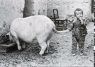 Fu Chun Wang  -  The family Pig, china, 1988 - Postkaart -  B2918-1