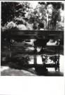 Eva Besnyo  (1910-2003)  -  In het park, Budapest - Postkaart -  B2993-1