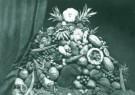 Anoniem,  -  Indische vruchten 1879 - Postkaart -  B3006-1
