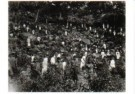 Anoniem,  -  Theeplukkers Ceylon - Postkaart -  B3177-1