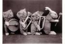 Spaarnestad Fotoarchief,  -  Dierenorkest - Postkaart -  B3230-1