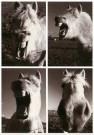 Agnes van der Lei  -  Het lachende paard - Postkaart -  B3242-1
