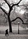 Ronald Arthur van Schaik (1956 -  R.A. Van Schaik/Central Park - Postkaart -  B3496-1
