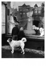 Ad Windig (1912-1996)  -  Mient, kledingmagazijn Petro, Alkmaar - Postkaart -  B3705-1