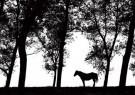 Coquille  -  Serenity - Postkaart -  B3757-1
