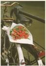 Tjalf Sparnaay (1954)  -  Tulpen uit Amsterdam - Postkaart -  C0636-1