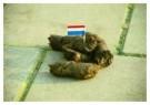 Dixie Solleveld  -  Amsterdam shit city - Postkaart -  C1002-1
