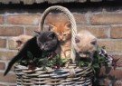 Ron Entius  -  Untitled - Postkaart -  C10057-1