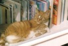 Eva Happee  -  Untitled - Postkaart -  C10220-1