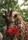 Ron Entius  -  Zeg het met bloemen - Postkaart -  C10285-1