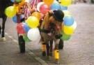 Ron Entius  -  Een feestje - Postkaart -  C10286-1