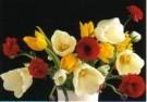 Marianne Cornelissen-Kuyt  -  Indoor Spring Garden - Postkaart -  C10371-1