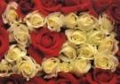 Paul Huf (1924-2002)  -  Flowerpower no.34 - Postkaart -  C1062-1