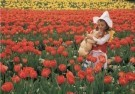 Coquille  -  Love among the tulips, 2008 - Postkaart -  C11465-1