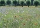 Coquille  -  In de velden van Vlaanderen, 2008 - Postkaart -  C11518-1