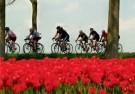 Henk P. Drost  -  Tour de tulipe, 2008 - Postkaart -  C11562-1