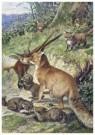 Cornelis Jetses (1873-1955)  -  Schoolplaat van planten en dieren - Postkaart -  C11605-1