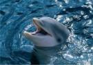 Jan Lens  -  Dolphin - Postkaart -  C11831-1