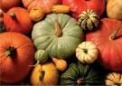 Jan Lens  -  Pumpkins - Postkaart -  C11835-1