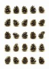 Peter Janssen (1951)  -  Portraits of pinecones - Postkaart -  C11895-1
