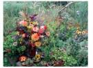Eduard van Koolwijk  -  Dahlia boeket in de tuin, 2010 - Postkaart -  C12051-1