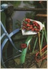 Tjalf Sparnaay (1954) - Tulpen uit Amsterdam II - Postkaart - C2138-1