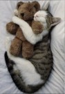 Letizia Volpi  -  Cat's pet - Postkaart -  C2227-1