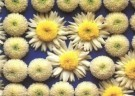 Paul Huf (1924-2002)  -  Flowerpower no.47 - Postkaart -  C2362-1