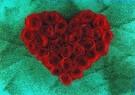 Mirja de Vries  -  Red heart... - Postkaart -  C2418-1
