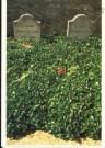 Paul Huf (1924-2002)  -  Grave-yard, Vincent van Gogh - Postkaart -  C2968-1