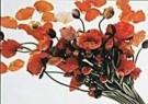 Paul Huf (1924-2002)  -  Flower Power nr. 54 - Postkaart -  C4485-1