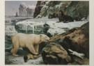 M.A. Koekkoek (1873-1944)  -  M.A.Koekkoek/Temidden van snee - Postkaart -  C4493-1