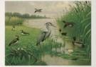M.A. Koekkoek (1873-1944)  -  Water- en weidevogels - Postkaart -  C4765-1