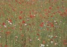 Leen Thijsse  -  Holland - Postkaart -  C4819-1