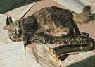 Letizia Volpi  -  Serena's cat and sax - Postkaart -  C5000-1