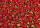 Letizia Volpi  -  Strawberries. - Postkaart -  C5093-1