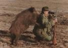 Sandor Szabo  -  Wild-Boar hunting - Postkaart -  C5319-1