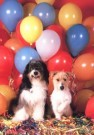 Tony Stone  -  Dogs with balloons - Postkaart -  C5414-1