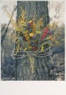 Steve Wright  -  S.Wright/Untitled - Postkaart -  C5559-1