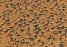 Ruud Hoff  -  Duckrace - Postkaart -  C5966-1