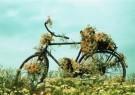 Rennes van de Riet (1961)  -  Flowerbike - Postkaart -  C6365-1