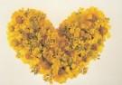 Mirja de Vries  -  Flowerhearts IX - Postkaart -  C7389-1
