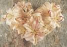 Mirja de Vries  -  Heart of Lilia - Postkaart -  C7462-1