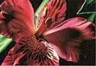Neil Strassberg  -  Intimacy, IV - Postkaart -  C8103-1